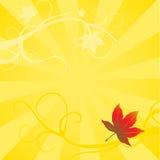Maple Leaf Background Stock Photo
