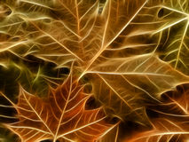 Maple leaf background Stock Photo