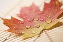 Maple leaf on bamboo mat. stock photo