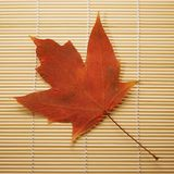 Maple leaf on bamboo mat. Royalty Free Stock Image