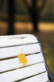 Maple leaf on bench Stock Photography