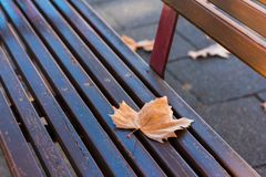 Maple Leaf in a Bench royalty free stock photography