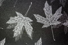 Maple leaf. Black and gray maple leaf wallpapper Royalty Free Stock Photos
