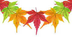 Maple leaf border. Continuous border of autumn maple leafs. The outside edges match up so you duplicate and create a border as long as needed stock photo