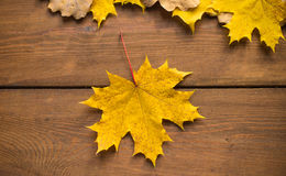 Maple Leaf on a brown board. Yellow maple leaf on the brown board Stock Photography