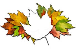 Maple leaf bunch Royalty Free Stock Photos