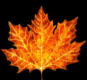 Maple leaf burning hot. Maple leaf colored in burning hot tones. Isolated on black background. Collage picture Royalty Free Stock Image
