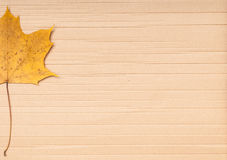Maple leaf on cardboard background. Royalty Free Stock Photography