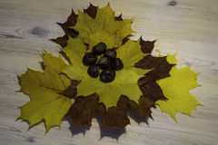 Maple leaf  with chestnuts. Maple leaf on the table with chestnuts Stock Photography