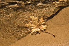 Maple leaf clear water sand Stock Image