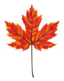 Maple Leaf. Color stripes, fire Royalty Free Stock Image