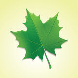 Maple leaf on colorful background. Royalty Free Stock Image