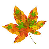 Maple Leaf Concept Royalty Free Stock Image
