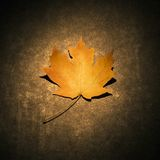 Maple leaf on concrete. Royalty Free Stock Photo