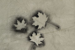 Maple leaf on the concrete wall background Royalty Free Stock Photo