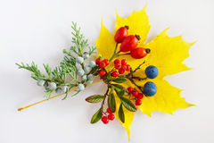 Maple leaf, cotoneaster, rosa hips, blackthorn with berries Royalty Free Stock Images