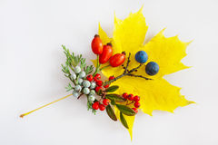 Maple leaf, cotoneaster, rosa hips, blackthorn with berries Stock Photo