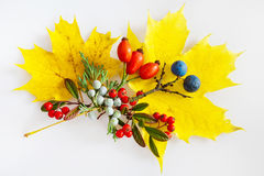 Maple leaf, cotoneaster, rosa hips, blackthorn with berries Royalty Free Stock Photo