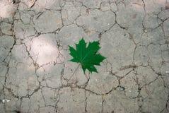 Maple Leaf. On cracked ground Stock Photo