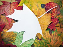 Maple leaf cut out of paper with space for text Royalty Free Stock Photos