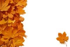 Maple Leaf Design. A maple leaf border design for stationary elements Royalty Free Stock Photo