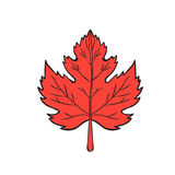 Maple Leaf Drawing Stock Photo