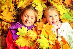 Maple leaf fall Royalty Free Stock Photo