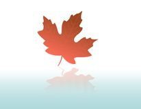 Maple Leaf Fall vector illustration
