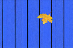 Maple leaf on the fence. Stock Photography