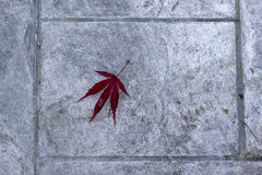 Maple leaf  on the floor Royalty Free Stock Photo