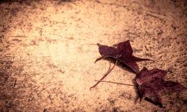 Maple leaf on the floor Stock Photos