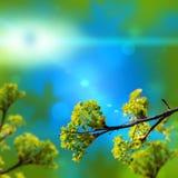 Maple leaf flower Stock Images