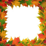 Maple Leaf Frame Royalty Free Stock Photos