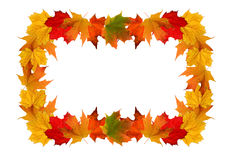 Maple leaf frame Stock Images