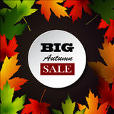 Maple leaf frame for seasonal sales Royalty Free Stock Photography