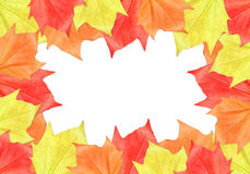 Maple Leaf Frame. On white background stock photo