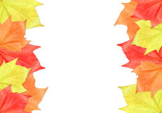 Maple Leaf Frame. On white background royalty free stock photos