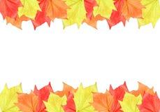 Maple Leaf Frame Royalty Free Stock Image