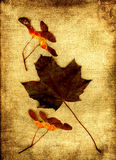 Maple leaf with fruits Royalty Free Stock Image
