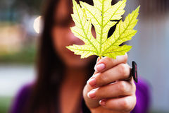 Maple leaf in girls hand Stock Image