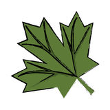 Maple leaf green sign canadian sketch Stock Photo
