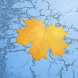 Maple leaf on grunge texture Royalty Free Stock Image
