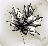 Maple leaf, hand-drawing. Vector illustration. Royalty Free Stock Photo