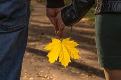 Maple leaf in the hands of the girl and the man in the park royalty free stock image
