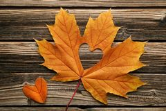 Maple leaf with heart stock photography