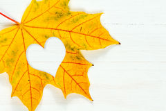 Maple leaf with heart shape Royalty Free Stock Photography