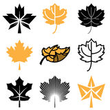 Maple leaf icons royalty free illustration