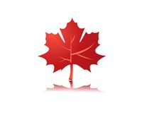 Maple leaf illustration Stock Photography