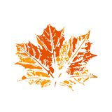 Maple leaf imprint, grunge texture, autumn colours royalty free stock image