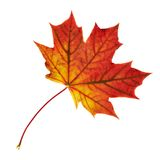 Maple-leaf isolated over white Royalty Free Stock Photos